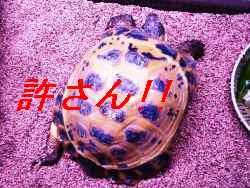 2012年10月12日_P1100315 - コピー.jpg