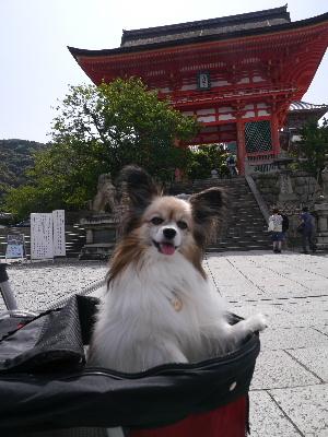 2012京都夏8.JPG