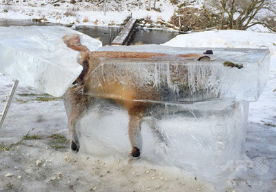 冷凍きつね