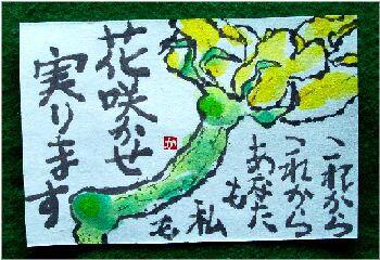 きゅうりの花 2