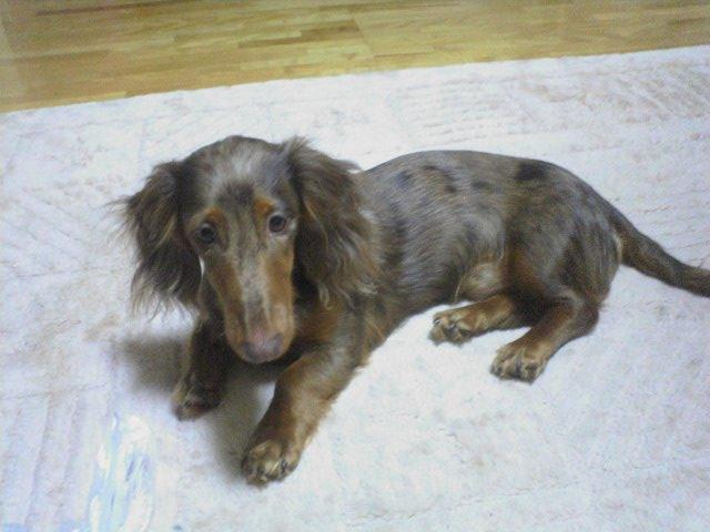 2006-06-08みすたぁ.JPG