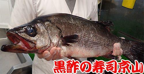 江東区 北砂 天然地魚の寿司