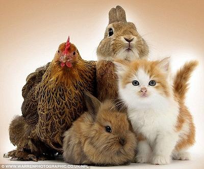 みんな動物皆兄弟1.jpg