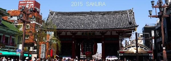 2015sakura10