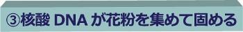 無題 (350x46).jpg
