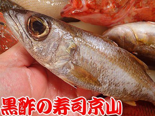 寿司 出前 新宿区 中井