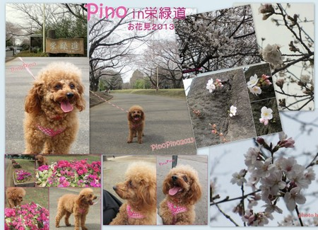 お花見20135-001.jpg