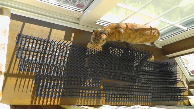猫よけとしても使えるハンズマンの 「ハト踏んづけない」NHY107