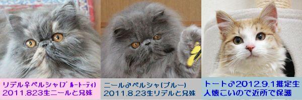 紹介2.jpg