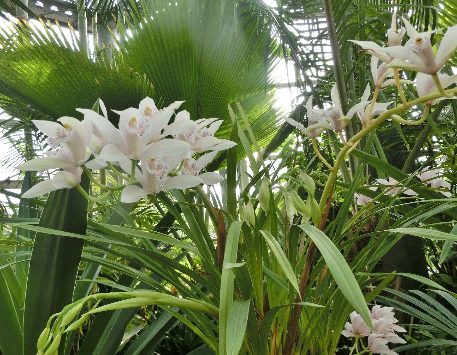 咲くやこの花館で見た カトレア...