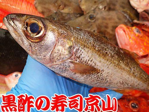 寿司 出前 新宿区 神楽河岸