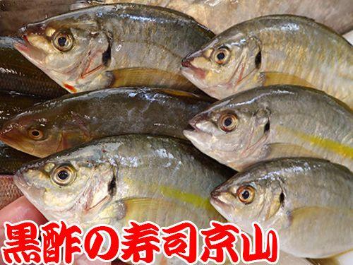 シマアジ 寿司 出前 未利用魚