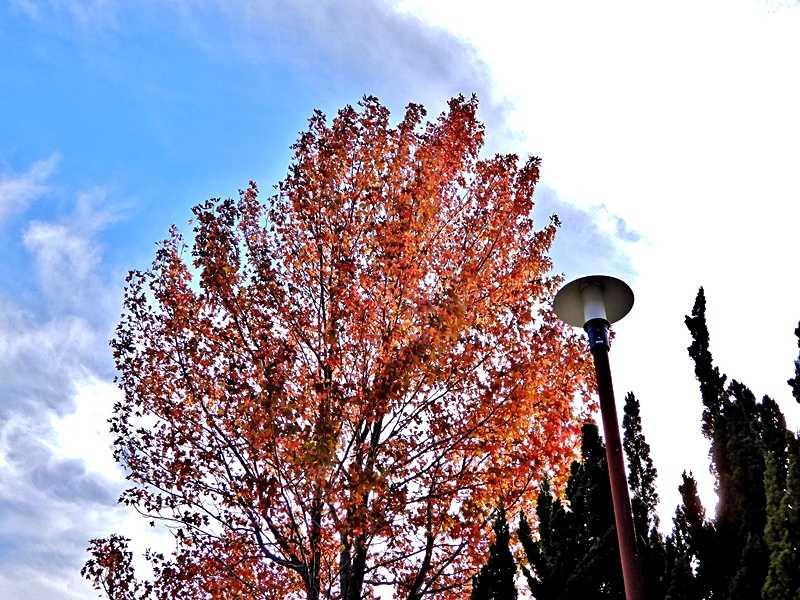 公園の紅葉8