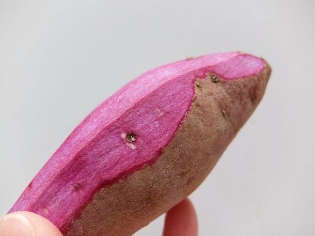 紫芋 むらさき スイートポテト クリームタルトレット