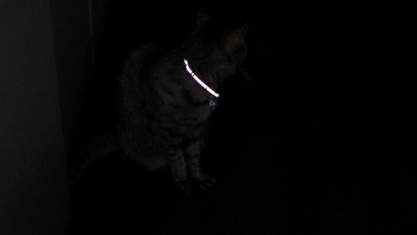 暗闇でも目立つ猫の首輪