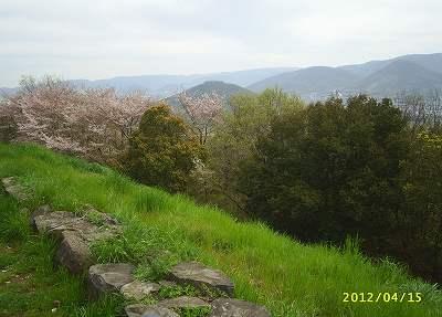 土器山頂上駐車場近くの桜