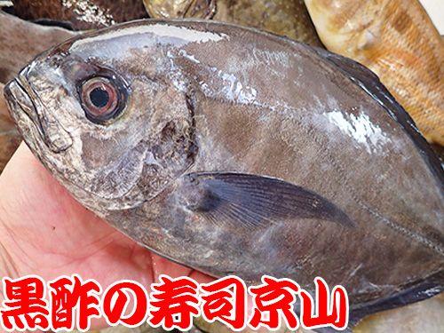 オキアジ 寿司 出前 未利用魚