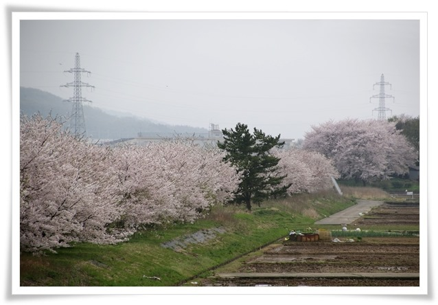 森下川-8 16.4.10