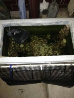発泡スチロールで水槽