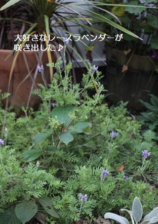 2014_1009_174403-IMG_9191.JPG