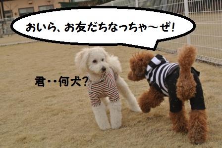 到着後のラン (100).JPG