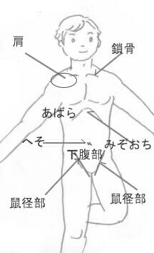 体の名前(胴体) 3