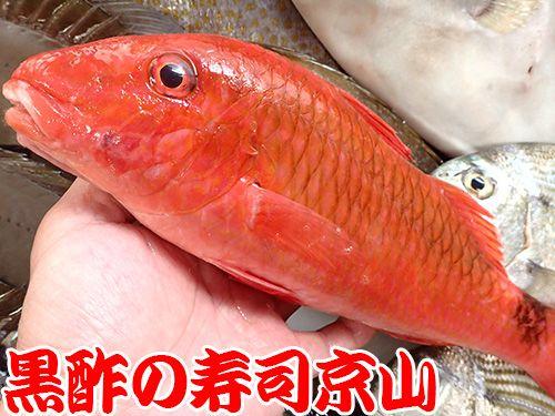 寿司 出前 江東区 古石場