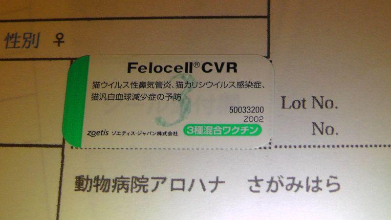フェロセル Felocell CVR
