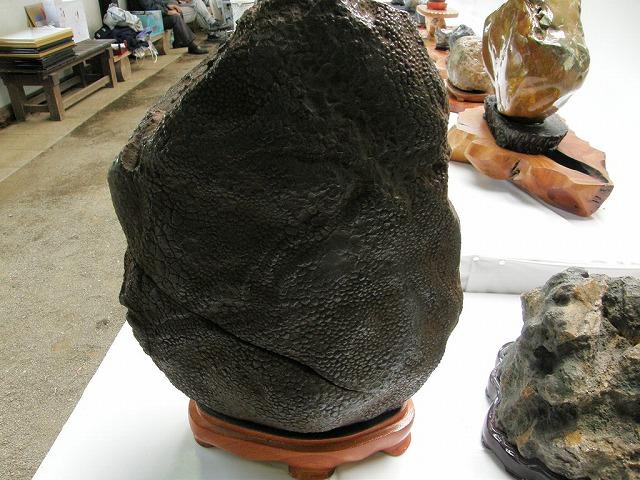 鮫石「今別産」