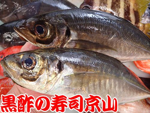 寿司 出前 港区 高輪