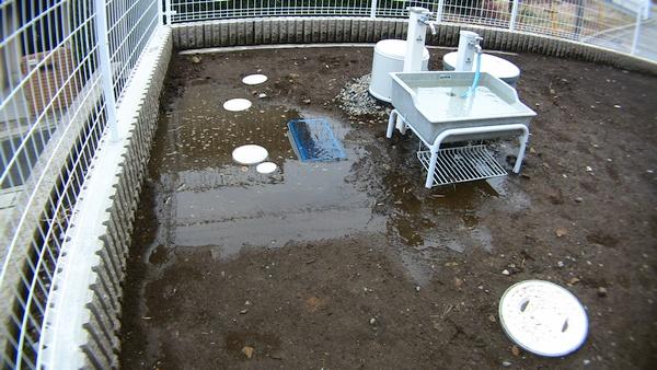 雨水枡 井戸 ポンプ