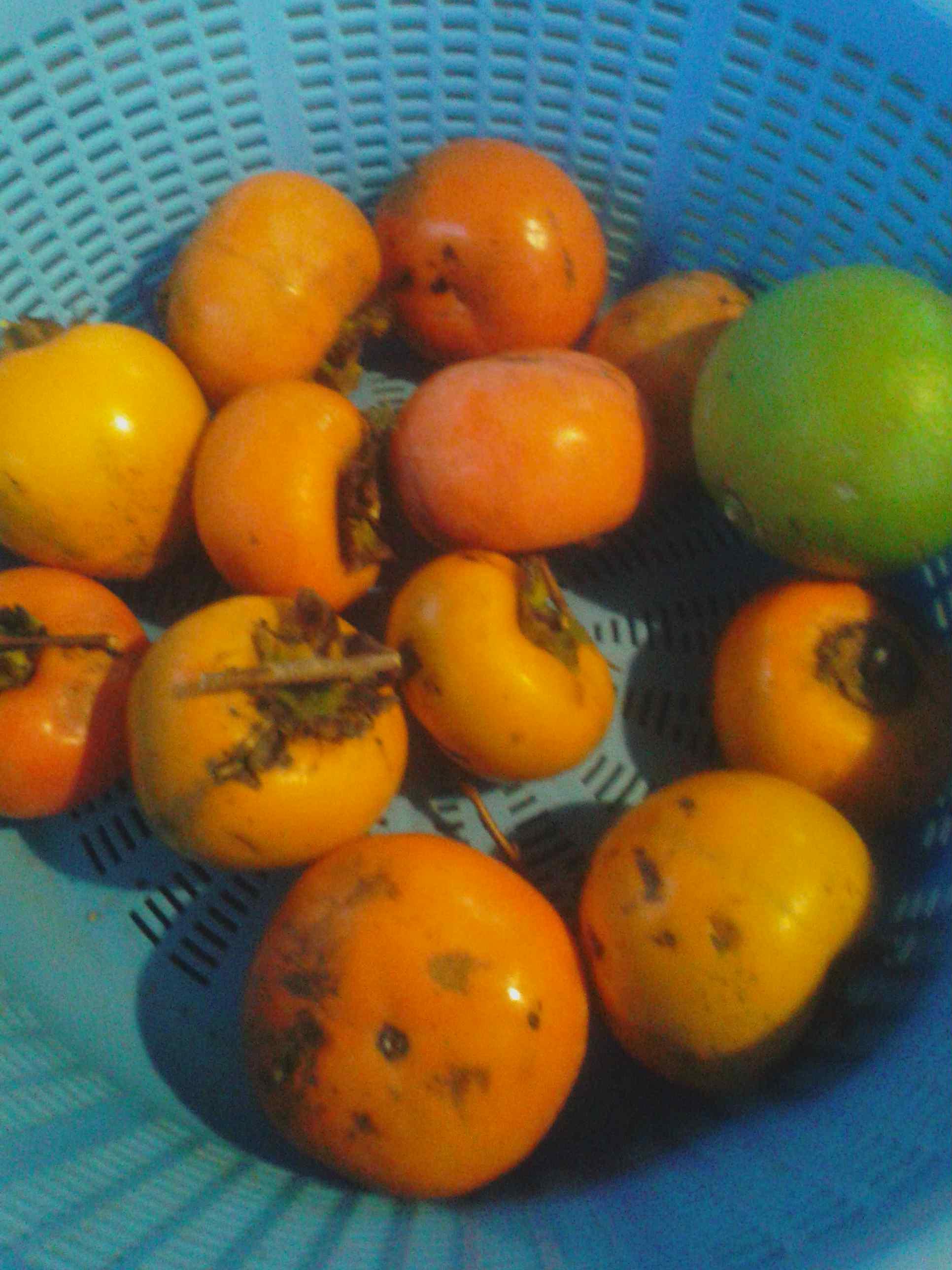 2017.10.23(月)の柿の収穫