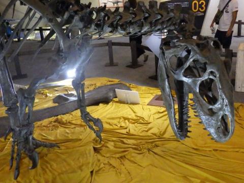 恐竜展2017巨大化の謎にせまる20 アロサウルスの全身骨格