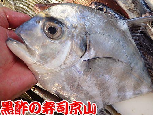 江戸川区一之江町まで新鮮美味しいお寿司をお届けします