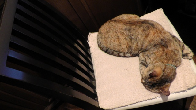 イスの上で寝る猫 ネコ ねこ