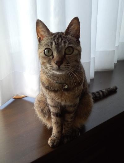 猫の写真を発掘