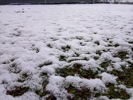 今年もクラピアに雪が積もりました3