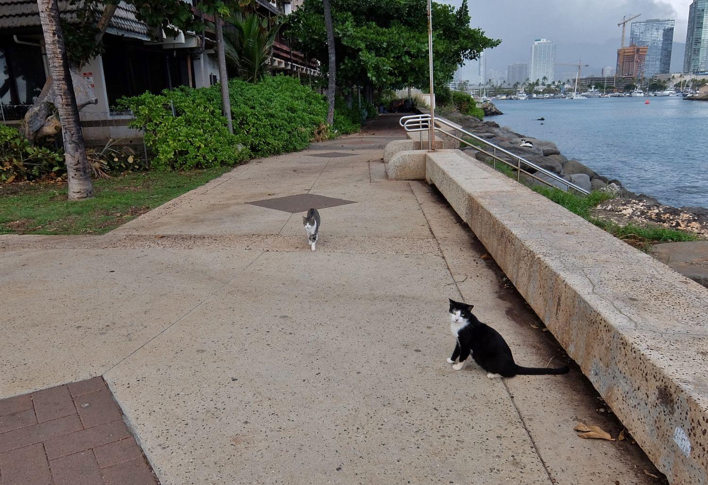 ハワイ インスタ カカアコ ウォーターフロント パーク スポット Kakaako Waterfront Park 猫