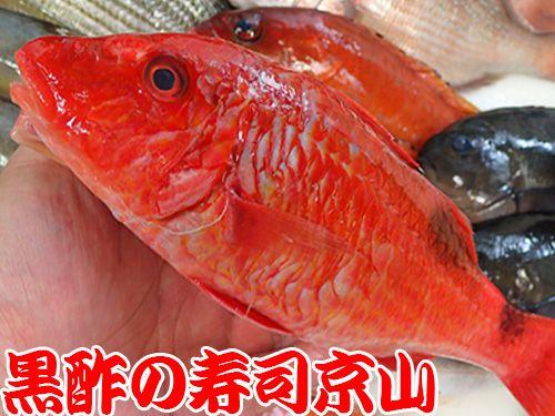 オジサン 魚 寿司