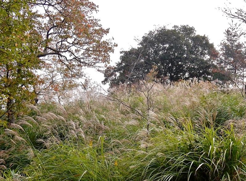 秋草の小径3.JPG