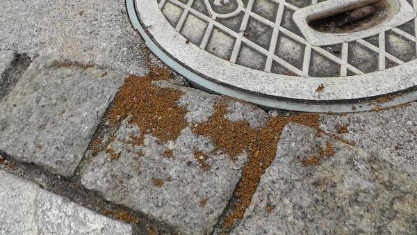玄関前の茶色い土