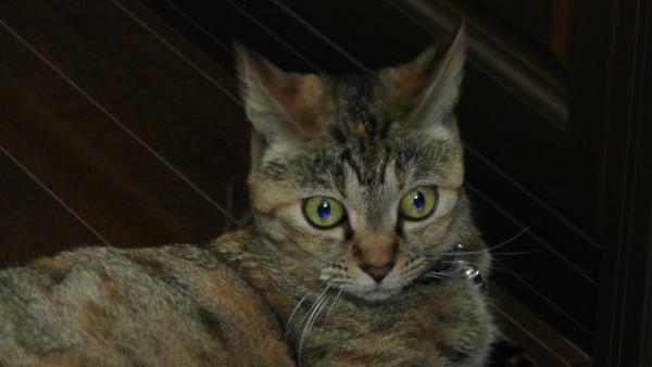 遠くを見るように、少し怖い目をする猫