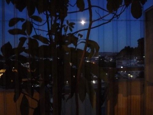 1アボカド夜景色1500.jpg