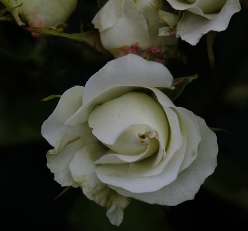 緑光0055-ML.jpg