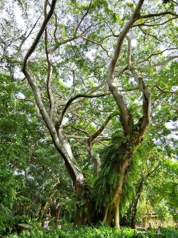 Wahiawa Botanical Garden ワヒアワ 植物園 ハワイ
