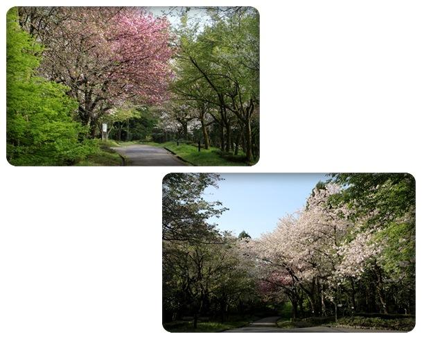 樹木公園-43 16.4.20