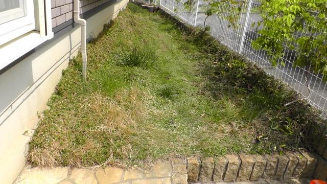 南側の庭 芝生の上にイワダレソウ