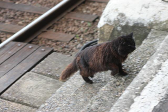 ひたちなか海浜鉄道  「駅猫おさむ 」3
