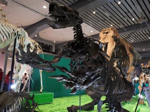 恐竜展2017巨大化の謎にせまる34 パラミロドンの全身骨格