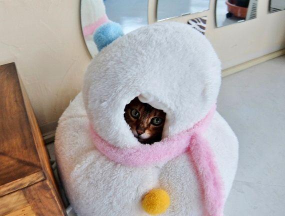 ねこ ベッド 猫 ネコ 冬 あったか 雪 ゆき だるま
